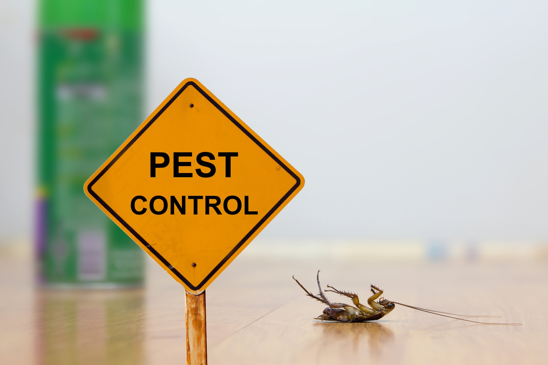 24 Hour Pest Control, Pest Control in Crystal Palace, Upper Norwood, SE19. Call Now 020 8166 9746