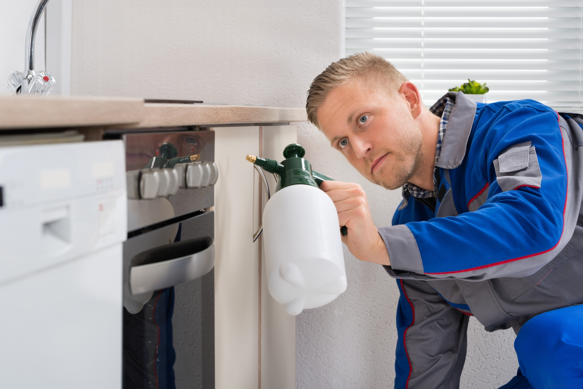 Pest Inspection, Pest Control in Crystal Palace, Upper Norwood, SE19. Call Now 020 8166 9746